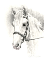 white horse with pink muzzle